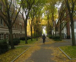 Lovely bicycle man fall autumn leaves harvard